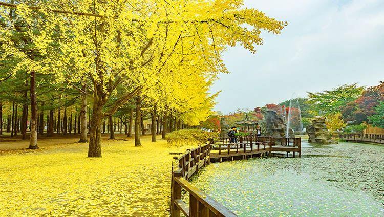 0013623_tour-dao-nami-va-lang-phap-petite-don-khach-tai-khach-san